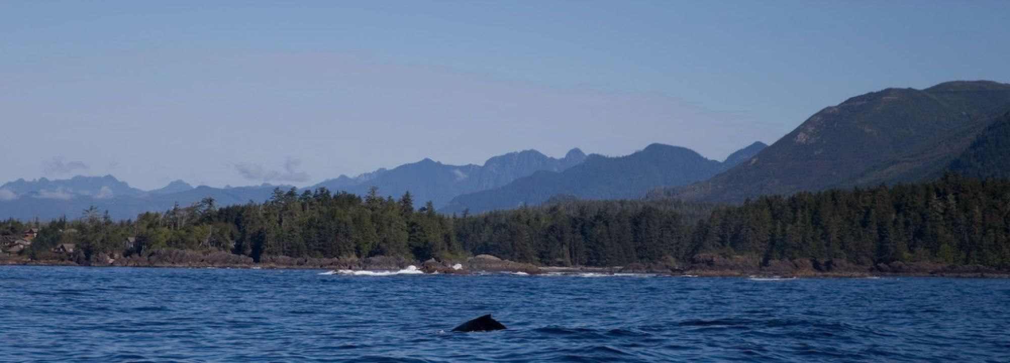 Day Fishing Trips for Ucluelet, Victoria BC - Salmon Eye Charters